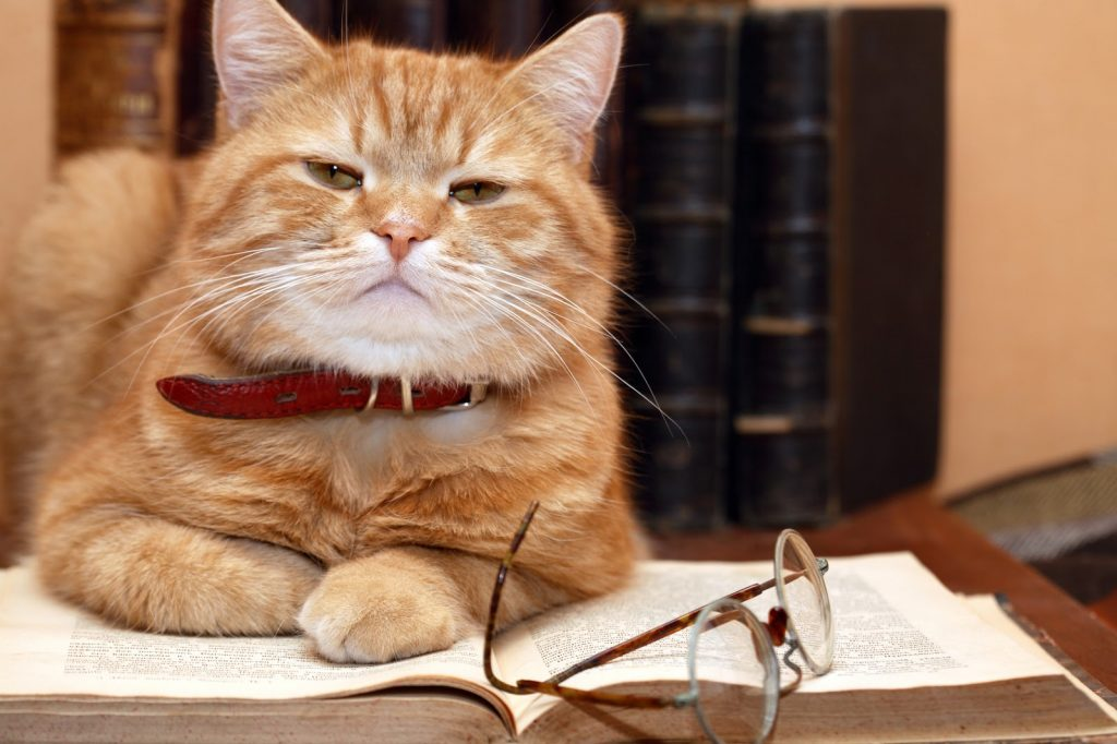 Глава I. Сказ Кота Учёного